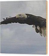 Bald Eagle Release 3 Wood Print