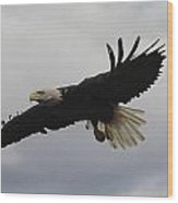 Bald Eagle Release 4 Wood Print