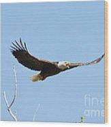 Bald Eagle Soaring Over The Trees Wood Print