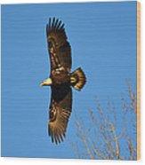Bald Eagle Soaring Over Trees Wood Print