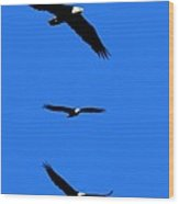 Bald Eagle Triptych Wood Print