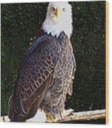 Bald Eagle Two Wood Print