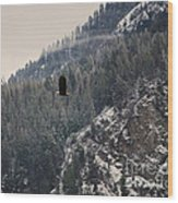 Bald Eagle V I Wood Print