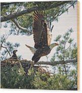 Bald Eagle With Eaglet Wood Print