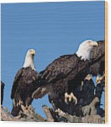 Bald Eagles Quartet Wood Print
