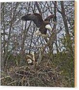 Bald Eagles At Nest Wood Print