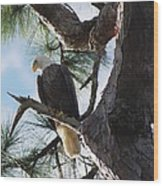 Bald Eagles Eye View Wood Print