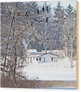 Bald Eagles In Tree In Grand Rapids Ohio 3996 Wood Print