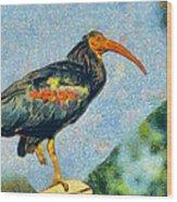 Bald Ibis Wood Print
