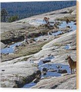 Bald Rock Lookout Wood Print