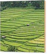 Bali Indonesia Rice Fields Wood Print
