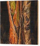 Balk Of Palm Tree Wood Print