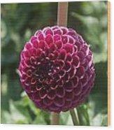 Ball Flower Wood Print
