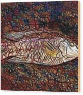 Ballan Wrasse Wood Print