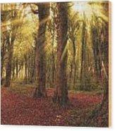 Ballyannan Wood Wood Print