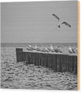 Baltic Sea-gulls Wood Print