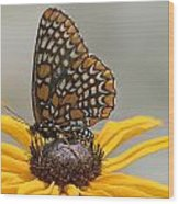 Baltimore Checkerspot With Black-eyed Susan Wood Print