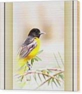Baltimore Oriole 4348-11 - Bird Wood Print