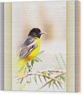 Baltimore Oriole 4348-12 Wood Print