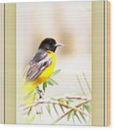 Baltimore Oriole - 4348-14 Wood Print