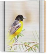 Baltimore Oriole 4348-19 Wood Print