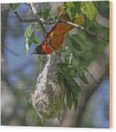 Baltimore Oriole And Nest Wood Print