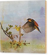 Baltimore Oriole Arrival  Wood Print