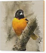 Baltimore Oriole Watercolor Art Wood Print