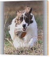 Bama - Pets - Dogs Wood Print
