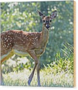 Bambi 2 Wood Print