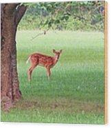 Bambi Days Wood Print