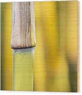 Bamboo Abstract Wood Print by Tim Gainey