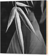 Bamboo And Banana Leaves Black And White Wood Print