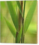 Bamboo Branches Emerge Wood Print