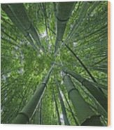 Bamboo Forest 1 Wood Print