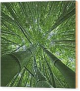 Bamboo Forest 2 Wood Print