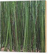 Bamboo Forest 3 Wood Print