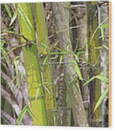 Bamboo I Poster Look Wood Print