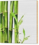 Bamboo Shoots Stacked Side By Side Wood Print by Sandra Cunningham