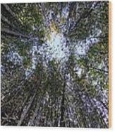 Bamboo Sky Wood Print