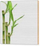 Bamboo Stems In Black Vase Wood Print