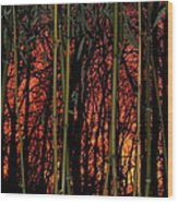 Bamboo Sunset Wood Print by Sharon Costa
