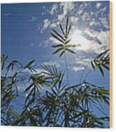 Bamboo Under The Sun Wood Print