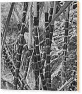 Bamboo-waimea Arboretum  Wood Print