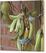 Banana Birds Wood Print