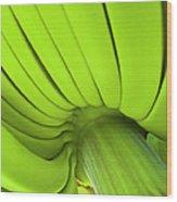 Banana Bunch Wood Print