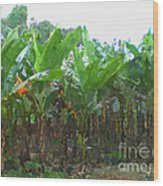 Banana Field Wood Print