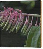Banana Orchid Show Wood Print