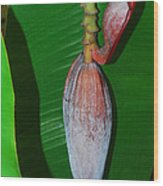 Banana Tree Bud Wood Print