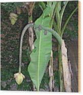 Banana Tree Flower Buds Wood Print